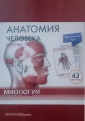 Анатомия человека. Карточки. Миология