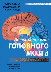Атлас анатомии головного мозга