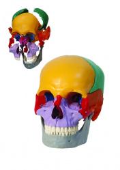 Цветная лего-модель черепа на защелках. 18 частей
