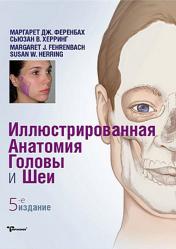 Иллюстрированная анатомия головы и шеи