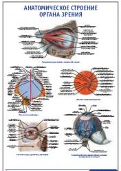 """Плакат """"Анатомическое строение органа зрения"""" pg0019"""