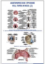 """Плакат """"Анатомическое строение уха, горла и носа 2"""" pg0008"""