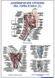 """Плакат """"Анатомическое строение уха, горла и носа 3"""" pg0009"""