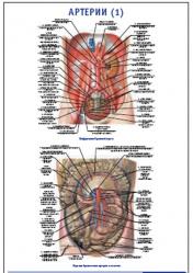 "Плакат ""Артерии 1"" pg0049-1"