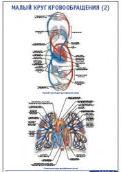"""Плакат """"Малый круг кровообращения 2"""" pg0069-2"""