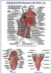 """Плакат """"Пищеварительная система 2"""" pg0063-2"""