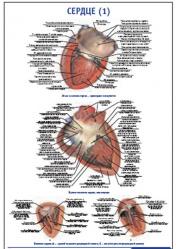 """Плакат """"Сердце 1"""" pg0072-1"""