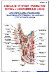 """Плакат """"Схема клетчаточных пространств головы и их связи между собой"""" (фронтальный распил головы) pgk024"""