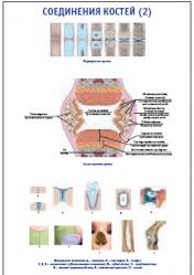 """Плакат """"Соединения костей 2"""" pg0048-2"""